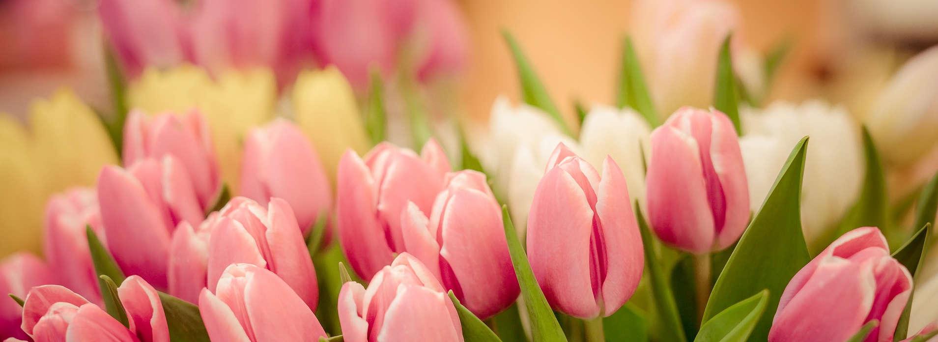 Blumenversand-Online24
